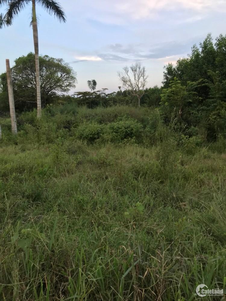 Đất sạch SHR rẻ nhất khu vực Long Phước, sân bay Long Thành chỉ 3.2 tr/m2 614m2