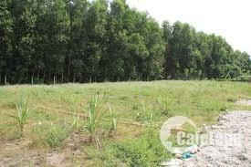 Chia tài sản bán  nhanh 1 miếng đất cây lâu năm, diện tích 500m2, gần Cát Lái