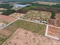 Cần bán 1000m2 đất sân bay Phan Thiết ngay trục ĐT715 giá 1,5 triệu/m2, SHR...