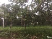 Cần bán 2.9ha đất vườn bằng đẹp tại xã Phú Sơn