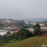 - Cần Bán lô đất của gia đình ở KQH Măng Lin - P 7- Tp Đà Lạt -