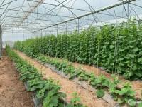 FarmStay G7. Đầu tư đất nền kết hợp nông nghiệp công nghệ cao.