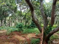 Bán đất vườn điều 4.4ha tại Phú Sơn LH:0366534667
