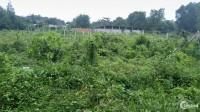 Đất vườn củ chi 1000m2,đường nhựa 1 tỷ 300 triệu. sang tên ngay.