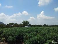 Bán đất Mẫu Mặt tiền Giá 1,1 tr/m2,Xã Tóc Tiên, Thị Xã Phú Mỹ