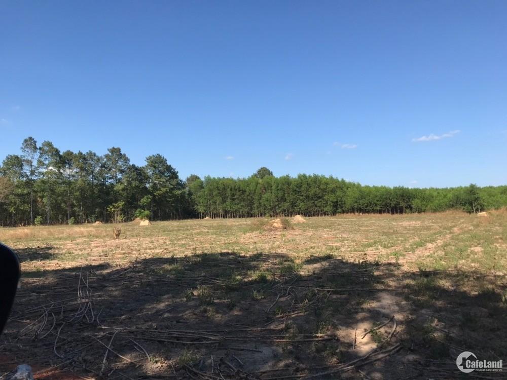 Chính chủ bán 1 mẫu đất Tân Hiệp gần sân bay Long Thành chỉ 18 tỷ giá tốt