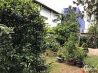 Bán Gấp Biệt Thự Sân Vườn Đường 12, Phường Trường Thọ, Thủ Đức, DT 1177m2