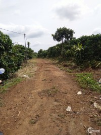 Nợ giang hồ cần bán gấp 6 sào đất Đại Lào Bảo Lộc Lâm Đồng