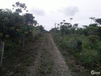 Cần tiền bán gấp Lô đất đường xuân diệu vào núi Sà Bung-Bảo Lộc-Lâm Đồng,shr,750