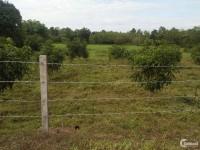 bán Đất trồng cây 9143m2 có 300m2 thổ cư với 127m mặt tiền đường xe hơi
