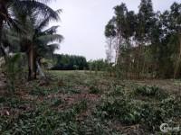 Chủ cần bán lô đất nền Phú Đông giá chỉ 1,2/m2