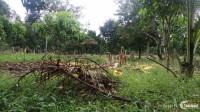 Gia đình tôi cần bán gấp 1000m2 đất hiện đang trồng cây măng cụt H. Thống Nhất