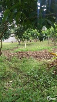 bán 1000m2 đất  đã có trồng cây măng cụt giáp ranh thị trấn Dầu Giây
