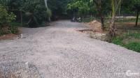 Gia đình tôi cần bán gấp 1000m2 đất trồng cây lâu năm huyện Thống Nhất.