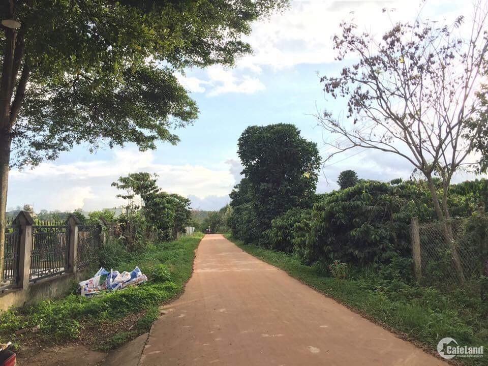 Bán gấp lô đất 2 mặt tiền xã Cư Suê 4400m2 có sẵn vườn cà phê, tiêu