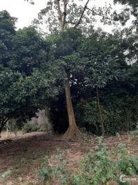 Chuyển nhượng 1600m2 đất thổ cư, giá bán của 10 năm trước ở Lương Sơn