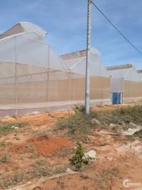 CỰC HOT- Đất Bình Thuận chỉ 50 ngàn/m2, sổ riêng từng lô. CHỌN NGAY!!!