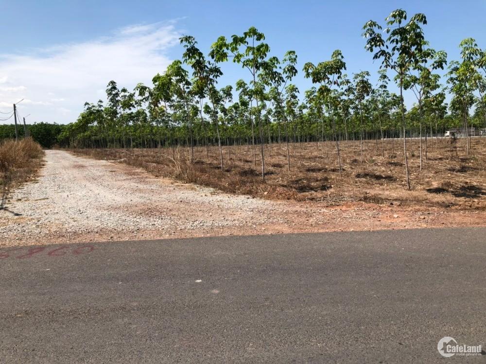 Bán đất vườn Chơn Thành, Bình Phước, diện tích 1000m2