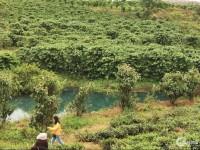 Đất thổ cư 100%,DT:252m2 TP Bảo Lộc,  giá từ 4,5tr/m2, đã có sổ hồng