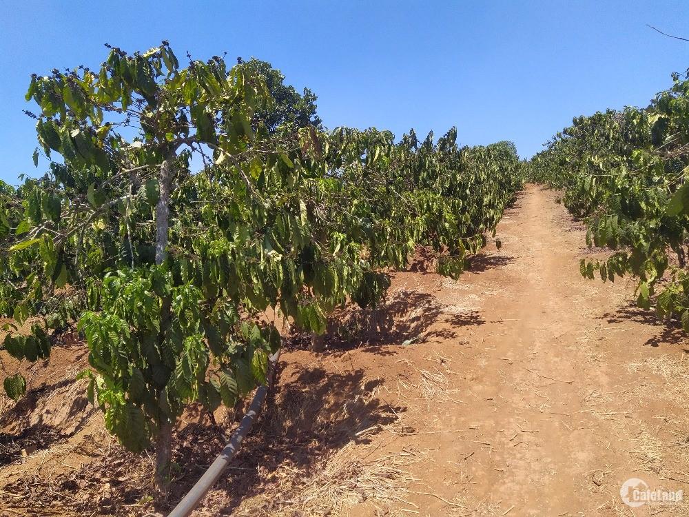 Bán đất trồng rau sạch và khu nghỉ dưỡng ở TaiHin lâm đồng.