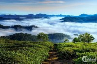 Hoà mình vào thiên nhiên, tận hưởng không khí trong lành mát mẻ Damb'ri Ecovill
