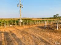 Cơ hộ đầu tư đất bình thuận đón đầu hạ tầng chỉ 70k/m sổ riêng Lh 0938677909