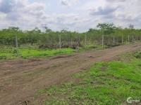 Do cần vốn làm ăn nên cần bán gấp miếng đất 1300m2 ở xã Hưng Thịnh, Trảng Bom.