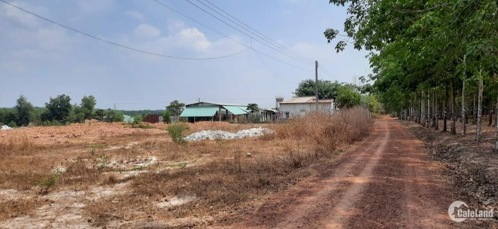Lô đất gần trường tiểu học Định An sát ĐH704  Dầu Tiếng Bình Dương