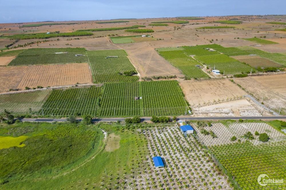 CƠ HỘI ĐẦU TƯ SỞ HỮU ĐẤT FARMSTAY CHỈ VỚI 610 TRIỆU – 10000 m2