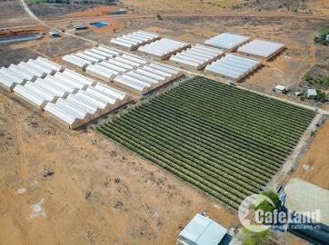Bán 11078m2 đất nông nghiệp hồng thái sang sổ ngay chỉ 50k/m2 Lh 0938677909