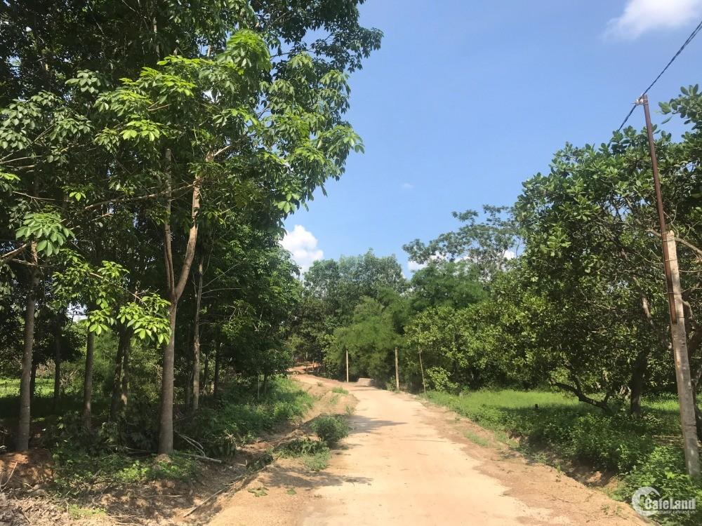 Chủ Gửi Bán 1,2hec Đất Trồng Điều Xã Tân Phước Huyện Đồng Phú Giá 1,9 tỷ