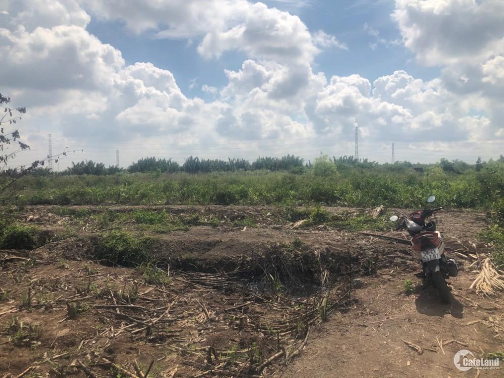 Đất nông nghiệp xã Phước Khánh giá rẻ đầu tư lâu dài . Ngay cụm KCN Ông Kèo