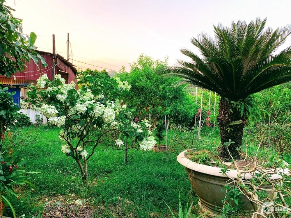 biệt thự vườn 1 hecta đã quy hoạch đẹp