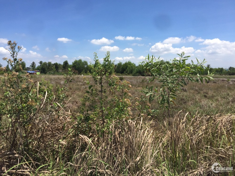 Bán gấp đất CLN chỉ khoảng 1 tr/m2 Xã Phước Khánh, Huyện Nhơn Trạch