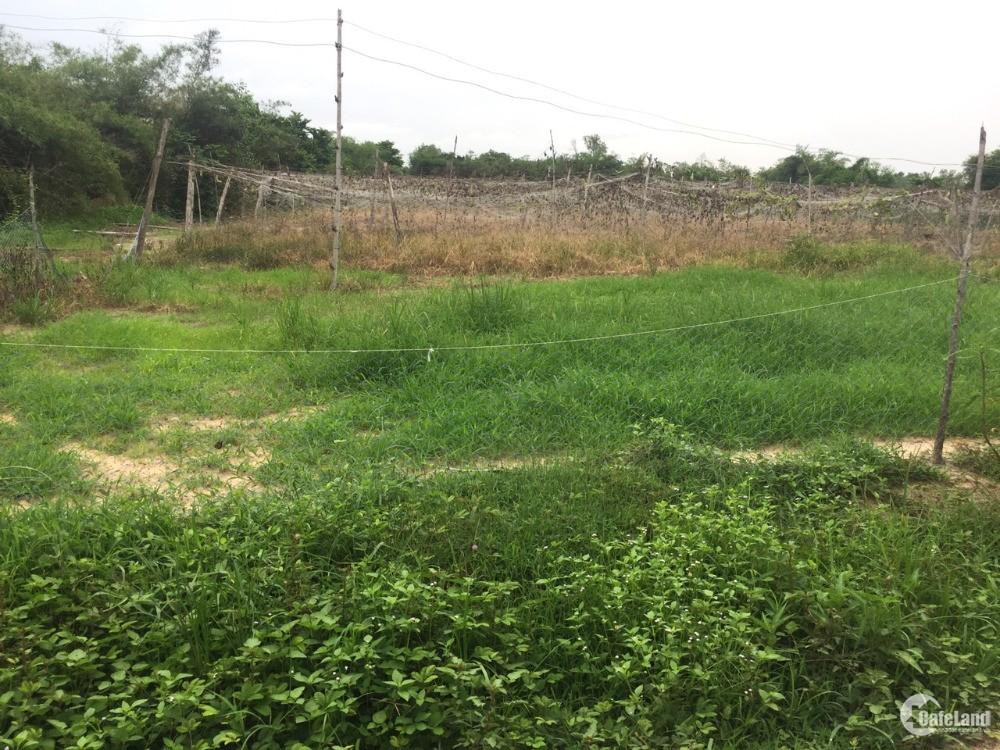 bán gấp đất thổ cư mặt tiền Vành đai 3 xã Phú Thạnh, huyện Nhơn Trạch, Đồng Nai