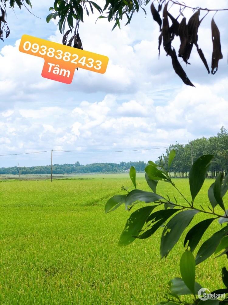 Đất Nhà Vườn Củ Chi Garden,SHR Sang Tay Nhanh