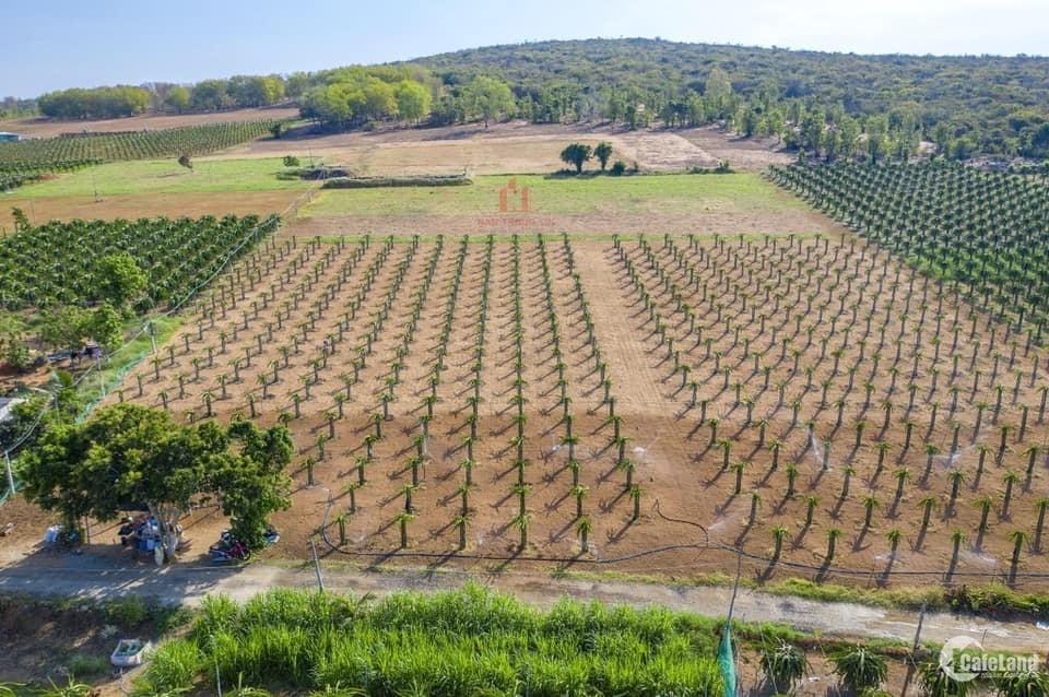 Đất bình thuận giá rẻ, chỉ 850 triệu/10,000m2. Sổ riêng từng lô.