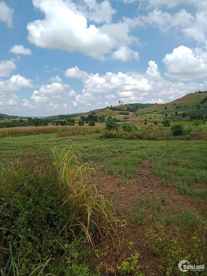 Sang khu đất rộng, bằng 50ha Đắk Mil, bao phân lô bán lẻ