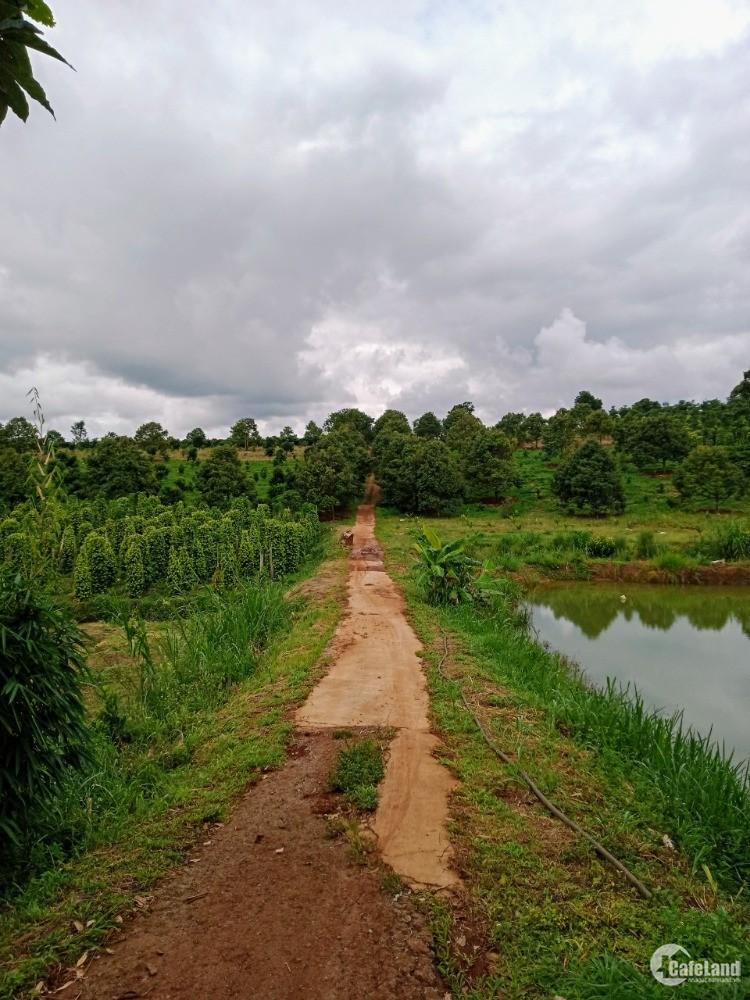 Kẹt nợ rao gấp quả đồi 10ha Đắk Song, trồng kín đất, bao sang sổ