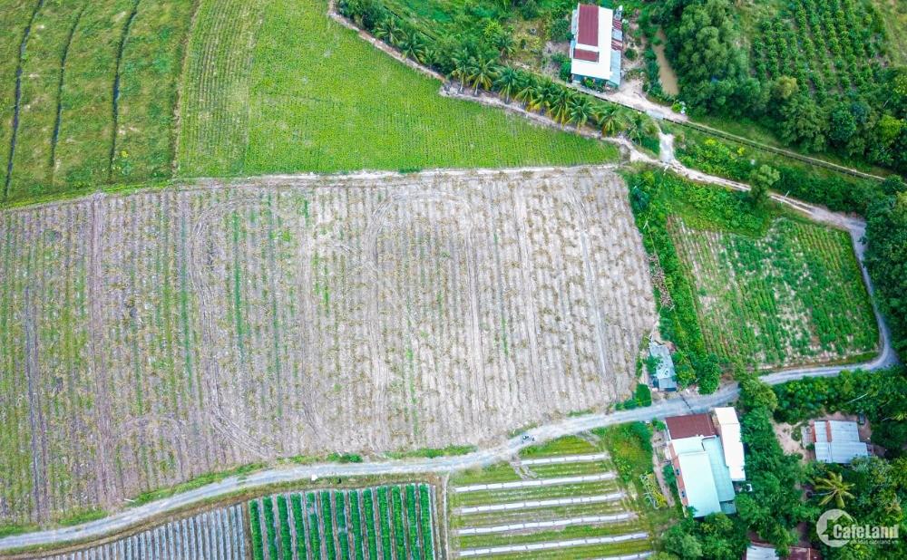 Bán đất rẻ Gò Dầu Tây Ninh, diện tích rộng rãi thoải mái, sổ hồng riêng.