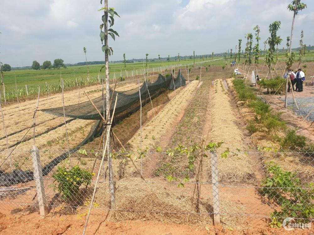 Đất vườn chính chủ tại Củ Chi. SHR