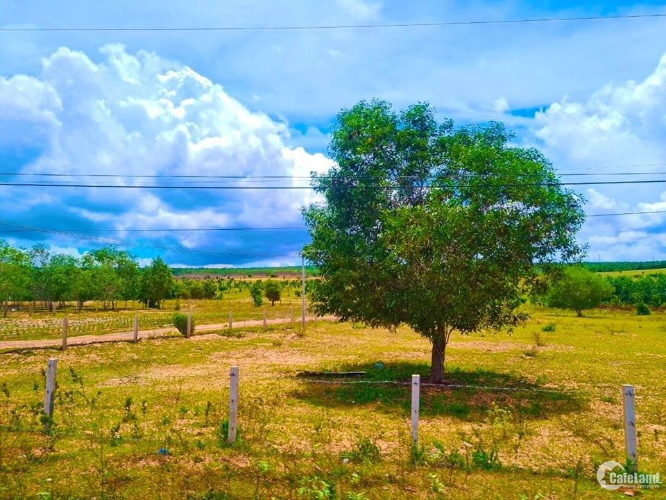 Bán 3545m2 đất nông nghiệp hồng thái sổ sẵn 283tr.