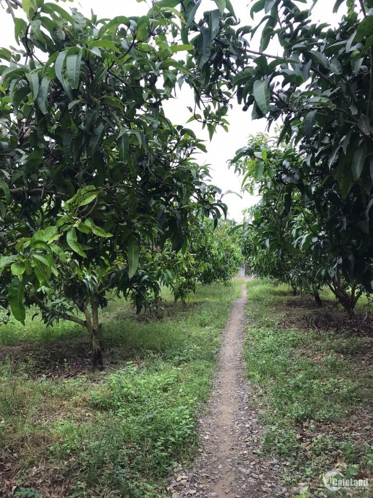 Bán Đất Vườn Bưởi Xã Ngọc Định-Định Quán-Đồng Nai