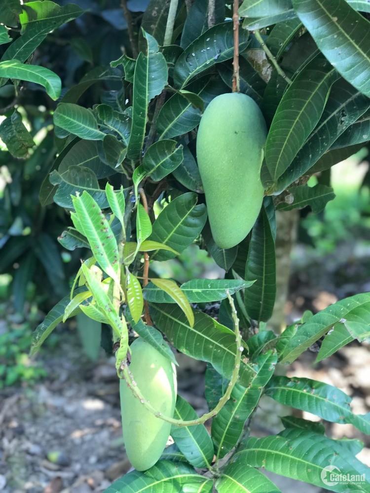 Cần bán gấp đất vườn trồng bưởi Định Quán Đồng Nai