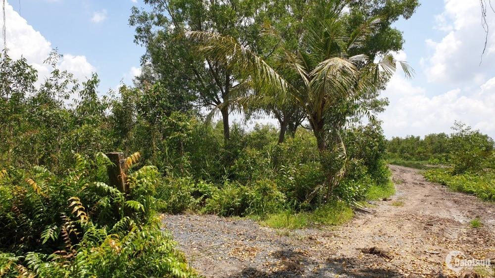 Chính chủ cần bán 3 lô đất Vĩnh Thanh Nhơn Trạch,đường 5m giá gốc cắt sổ 1,3tr/m