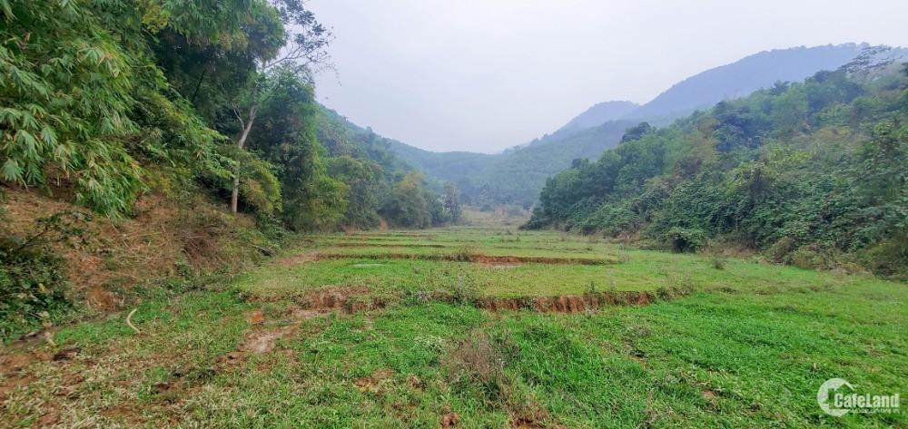 Chỉ 800 Triệu/Ha – Bán Đất Đẹp Gần Khu Công Nghiệp Yên Quang