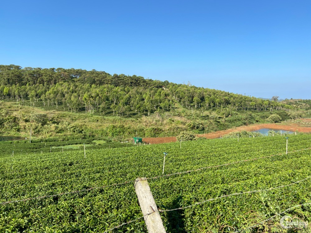 Cần bán đất du lịch đồi chè Tâm Châu, Bảo Lộc giá chỉ 399 triệu đồng
