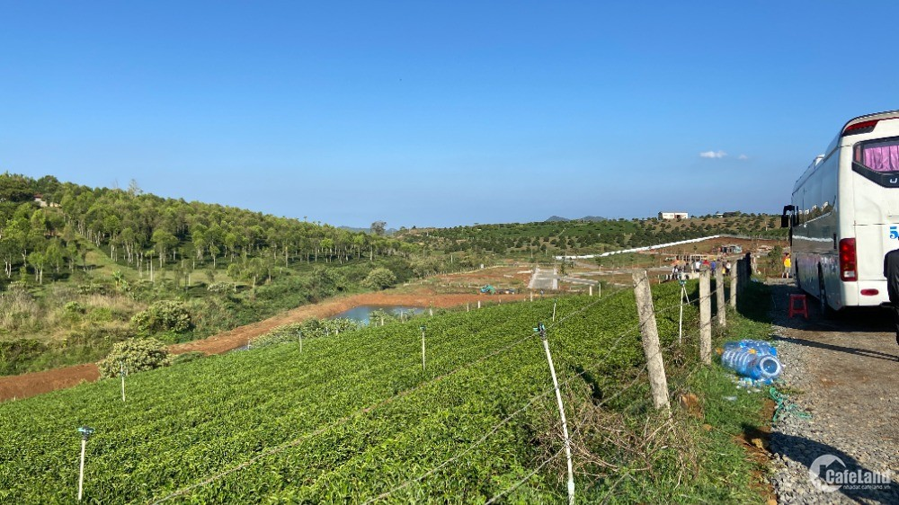 Mua đất Bảo Lộc vị trí đẹp kế bên đồi chè Tâm Châu