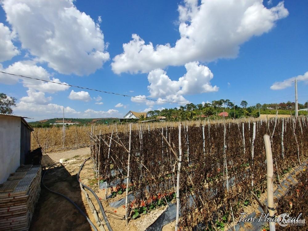 Bán 7.979m2 đất ở trung tâm hánh chính xã Tà Hine,Đức Trọng,giá 3,2 tỷ TL