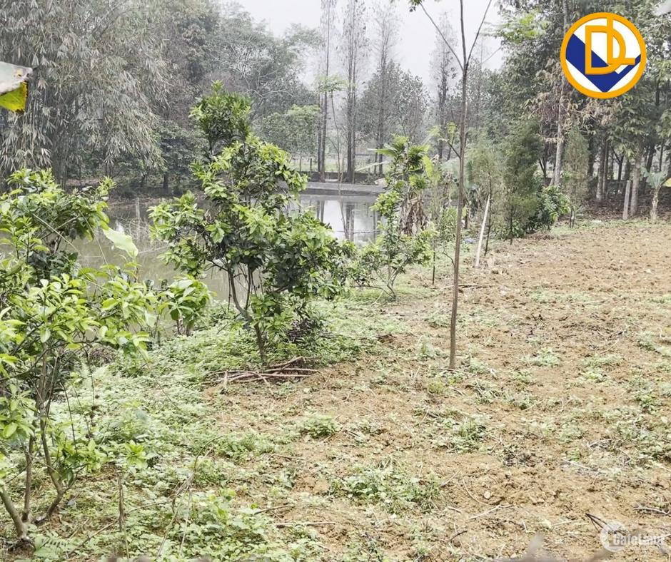 Bán đất tại Hòa Thạch Quốc Oai Hà Nội giá siêu đẹp 204m2 cần bán